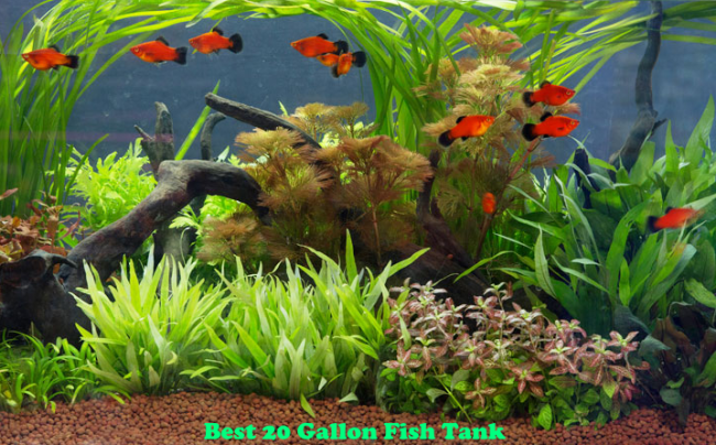 Best 20 Gallon Fish Tank | Aquarium Reviews in 2020